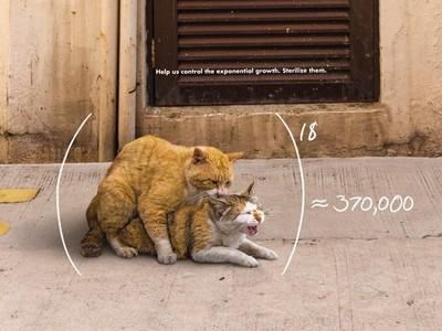 看過「浪浪性愛24式」嗎?2貓交配變出37萬隻,真的會發生!