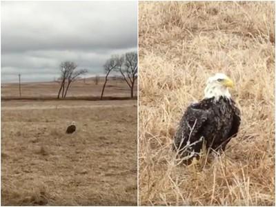 冰風暴侵襲!老鷹受凍飛不高 護林員幫取暖讓牠重回天空