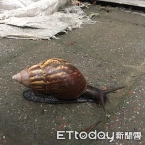 世界首例廣東住血線蟲發生在台灣