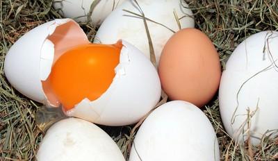 破殼蛋不能當液蛋!違者最重罰300萬