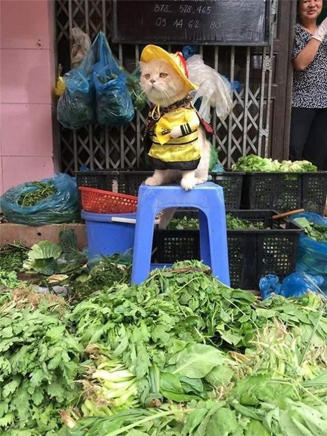 大檸檬用圖(圖/翻攝自Le Quoc Phong臉書)