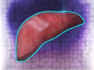 真有解毒功能! 3D列印機成功製作出肝臟