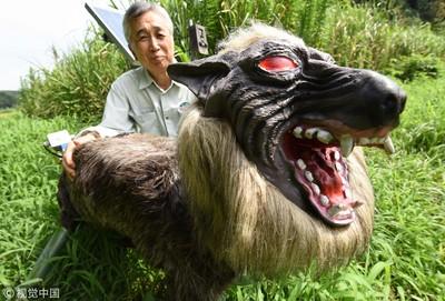機器狼嚇退野生動物 農夫也嚇到了