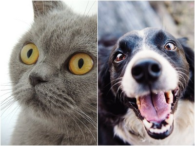 狗貓誰的「智商高」?學者測完喵皇崩潰喊:以後不敢再惹主子了
