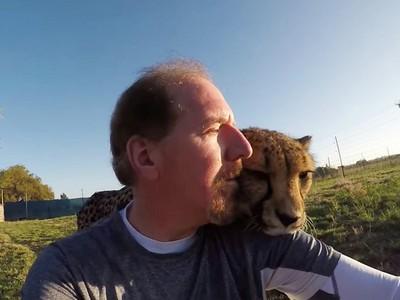 背對大貓很危險!動物學家以身試險...獵豹秒偷襲狂舔