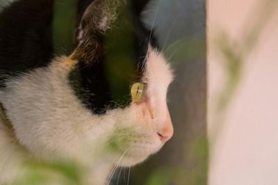 貓最討厭人類做「10件事」! 亂戳手、不梳毛都會很Sad