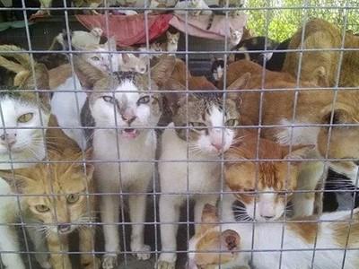 暗訪「貓肉屠宰場」!強壓溺死活剝皮 越南人讚:人間美味