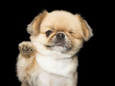 少隻眼睛我還是愛你!「完美的不完美」攝影集,身障狗狗一樣暖心