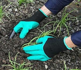 網拍賣家推專業掃墓人 代客整理墓園