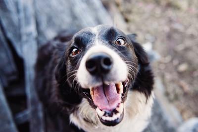 狗齡怎麼算?「狗1歲=人7歲」是錯的…2歲前發育超前人類10倍