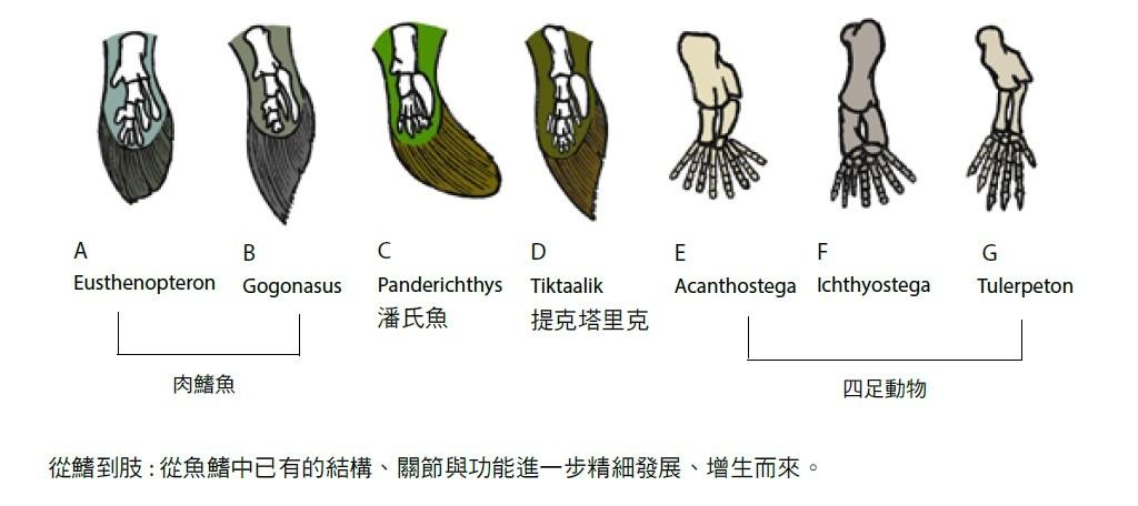 大檸檬用圖(圖/聯經出版提供)