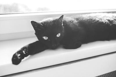 黑貓主人很傲嬌? 從「養什麼貓」看出奴才隱藏性格!