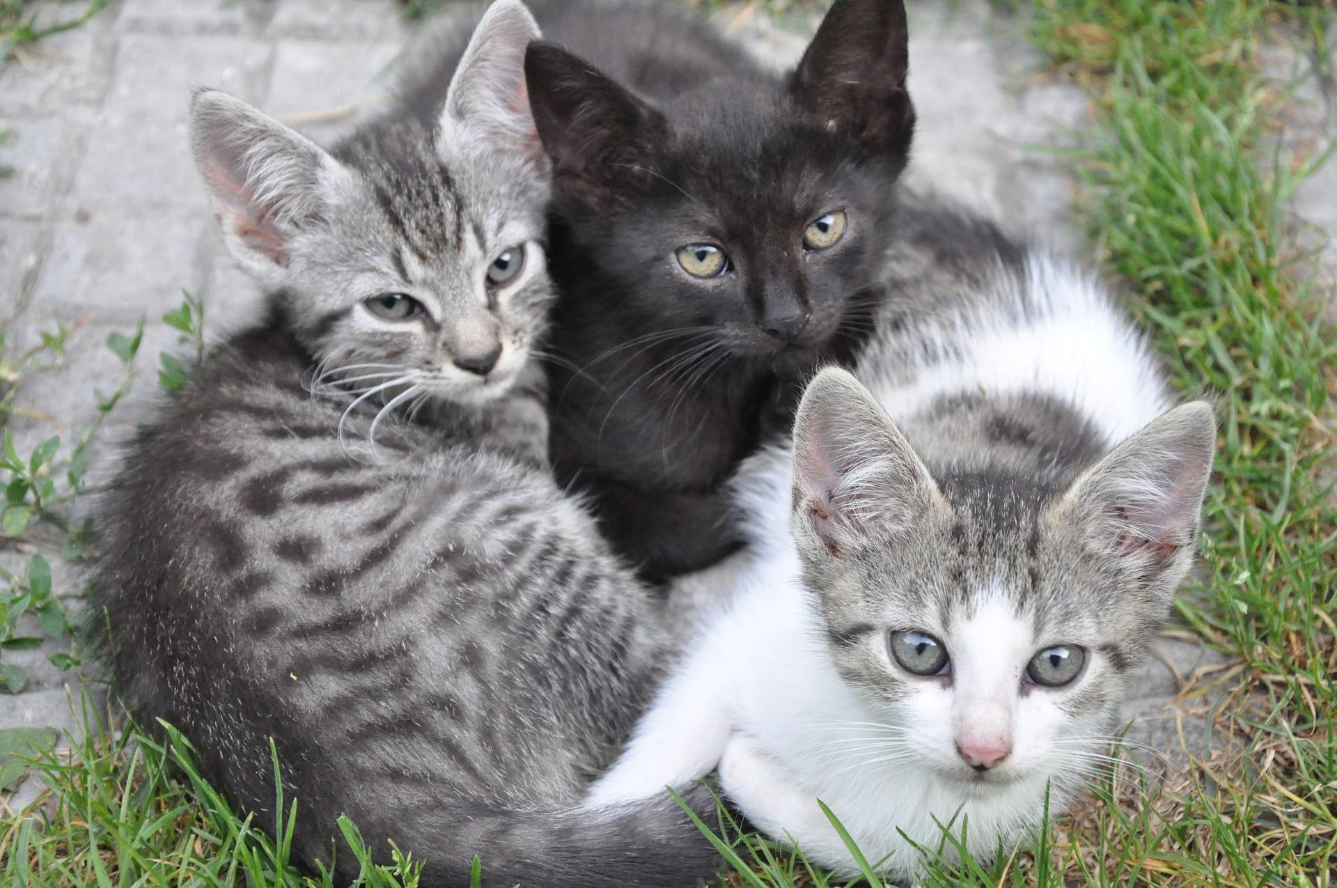 ▲▼貓,幼貓,流浪貓,喵星人,動物,寵物,流浪動物(圖/取自免費圖庫Pixabay)