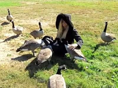 曾因受傷被同伴捨棄 加拿大雁獲救後每年都帶子孫回恩人身邊
