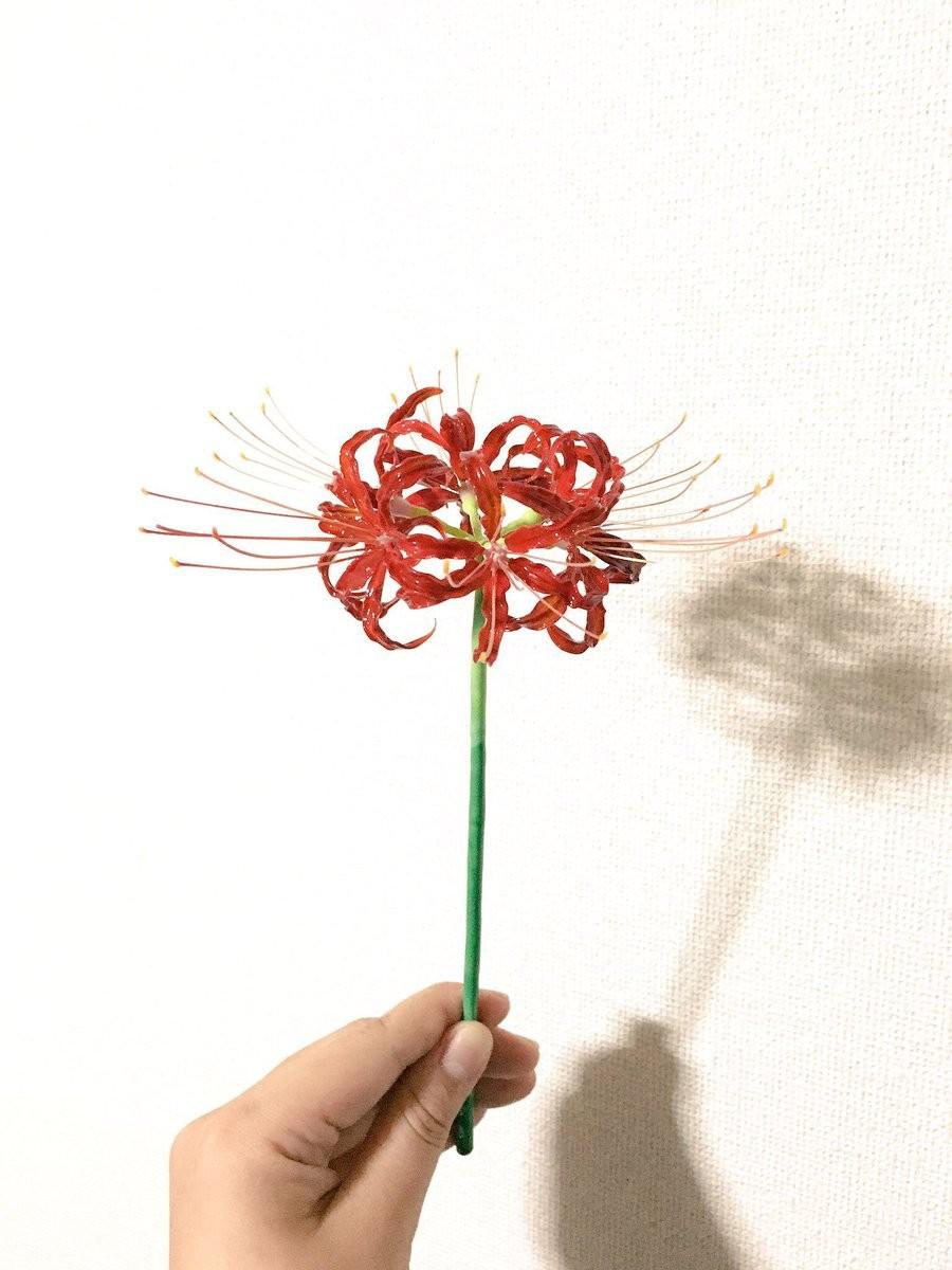 ▲▼琉璃植物昆蟲(圖/翻攝自Twitter)