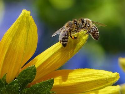 蜂群構成巨型生命體?學者驗證有心理學反應 每隻蜜蜂都是神經元