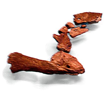 ▲▼提克塔里克魚(圖/翻攝自Wikipedia)