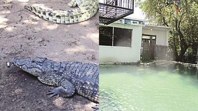 婚宴變恐怖片!醉男「跳進鱷魚池」祝友新婚 慘遭3鱷扯斷手臂