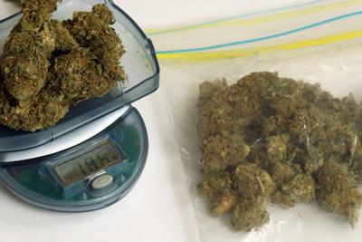 太好賺 加國男走私38公斤大麻花栽了