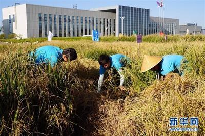 前副廳級官員賣假種子 損失1.4億