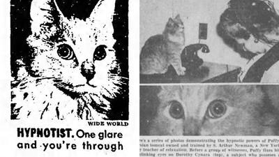 貓能控制腦波!二戰喵大師靠「深邃眼神」催眠人類只需30秒