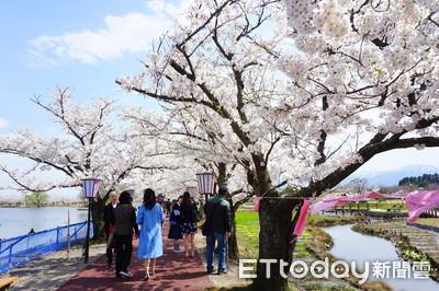 日本櫻花前線預測 東京3/18開花