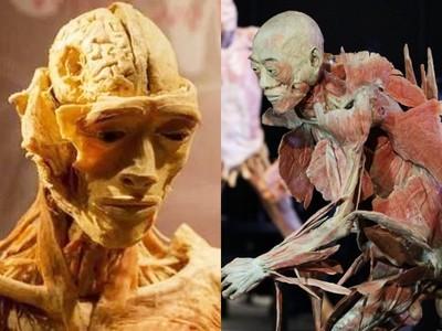 受虐死囚遭「非自願剝皮」!知名展覽驚爆隱瞞來源,曾在台灣展出