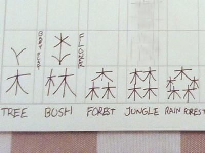 小六神童發明8個漢字!「木」字創意堆疊,還精準中翻英
