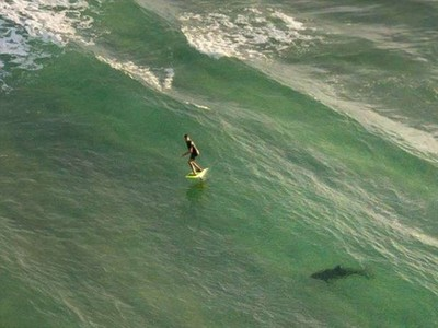 衝浪客被海中「巨大鯊影」緊追 空拍機驚險錄下鯊口逃生過程
