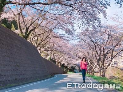 日本東京櫻花提早開了 櫻花季正式開跑