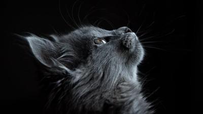 看見你的眼裡有蜂蜜│死貓 卓純華