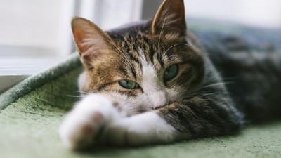 看見你的眼裡有蜂蜜│貓奴 卓純華