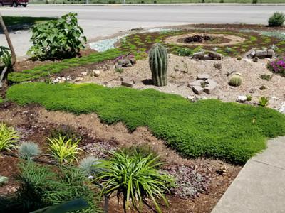 來不及的願望!園藝門外漢打造花園,引來「小精靈」半夜偷獻植物