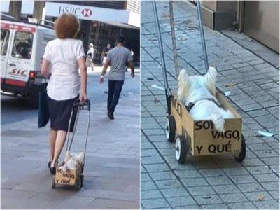 小狗坐輪椅也要散步?網友上前給鼓勵…主人苦笑:牠沒病,就懶而已