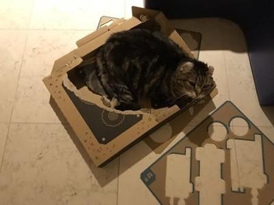 科技打不過貓!「任天堂LABO」初日就爆災情...皇上把零件吃了