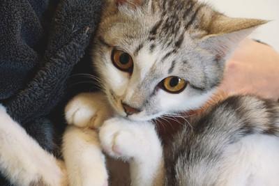 鏟屎官們注意! 「3歲小貓vs.高齡貓」腎病原因差很大