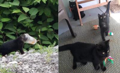 黑貓頭卡杯蓋 誘捕籠連抓3分身