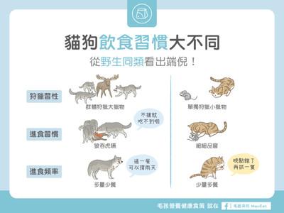 為何貓貓、狗狗「吃飯速度差很大」? 背後真相超佛系!