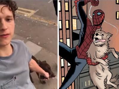 湯姆霍蘭德幫迷路汪找到家 暖爆網友:我知道他為什麼是蜘蛛人了