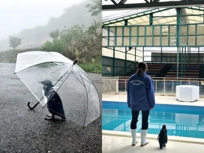 我不可愛了嗎?動物園拍下「企鵝孤單背影」悲情牌讓遊客心疼掏錢