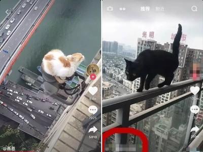 橘貓懸坐32層樓...摔下碎骨!貓9條命是謬論 人們只看到倖存者