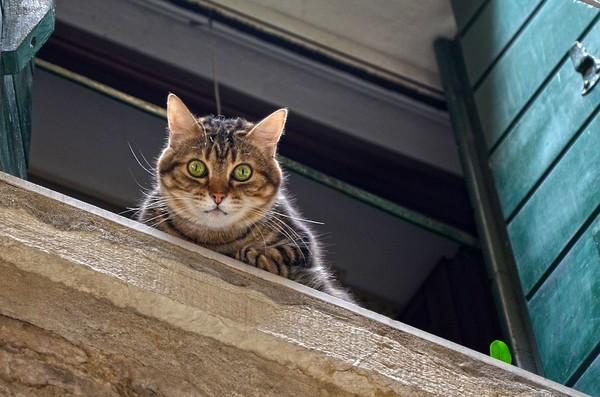 橘貓懸坐32樓摔下去 ...死狀悽慘! 都市傳說「貓有9條命」原來背後的真相竟是...?