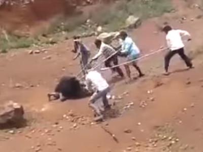 白目男「找黑熊自拍」遇襲...村民拿長矛捅死無辜熊