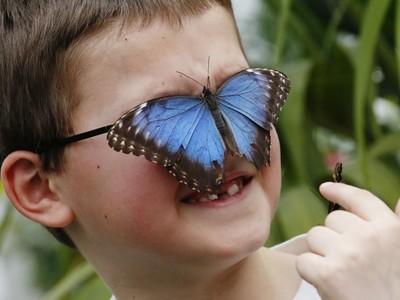 怕蝴蝶的人在想什麼?揭密「蝴蝶恐懼症」六大原因