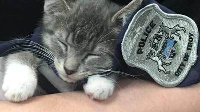 送喵進警局!警方打賭「破萬讚就聘一隻貓」...當然成功啦(ΦωΦ