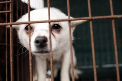 衝業績保捐款!韓動保團體秘密撲殺230犬隻