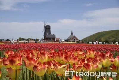 以荷蘭「花卉」為例,談韓國瑜會是好市長嗎?