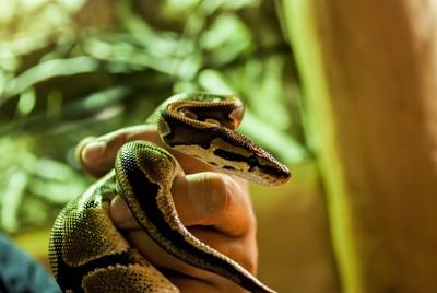 名寺放生15條劇毒蛇 居民剉咧等