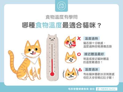 過熱過冷都NG! 原來貓咪最愛「這溫度」食物...筆記沒?