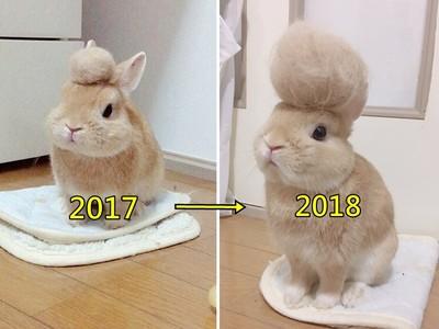 川普兔進化!百變「掉毛蓬鬆帽」今年堆成爆炸頭啦